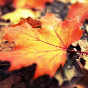 Jesen bo prijetna z ajurvedo